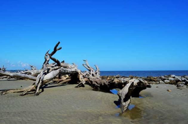 driftwood-beach-jekyll-island-a