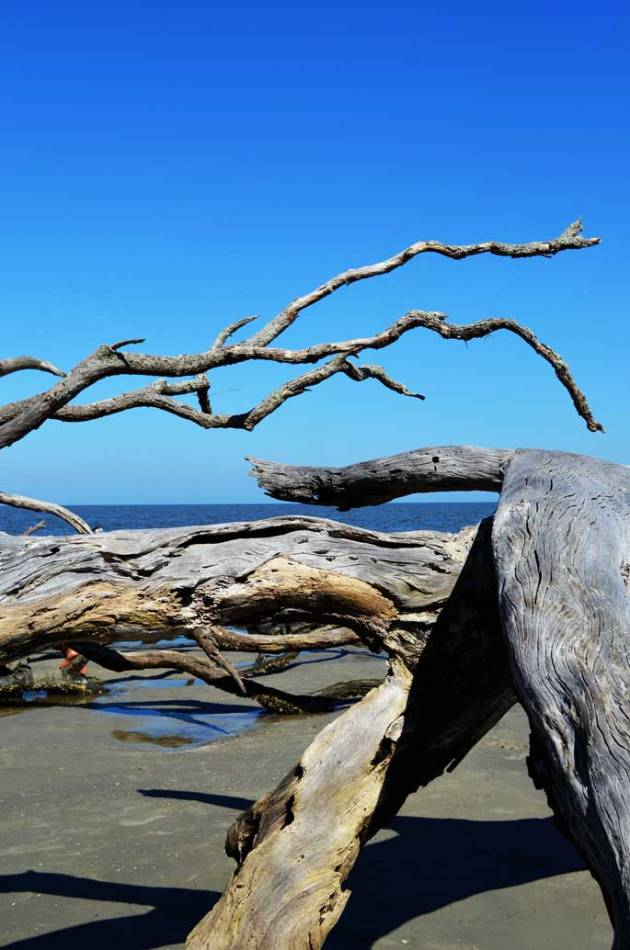 driftwood-beach-jekyll-island-c