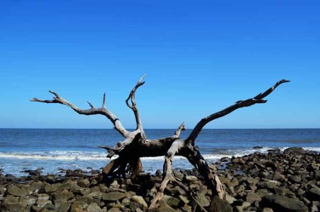 driftwood-beach-jekyll-island-d